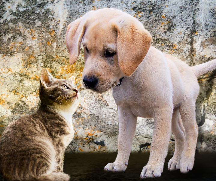 Como lidar com a queda de pêlo de gatos ecães?