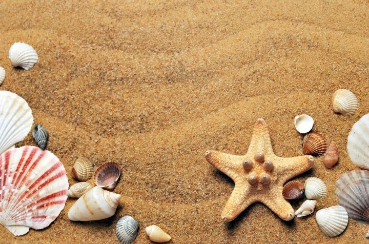 Ideias para reutilizar as conchas que se apanham na praia comodecoração
