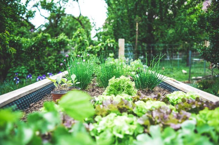 Como fazer uma horta emcasa