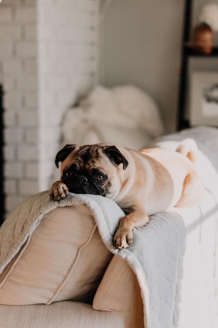 Fechado em casa com um cão desobediente? Aprenda atreiná-lo!